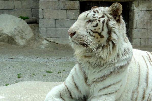 taboo zoo