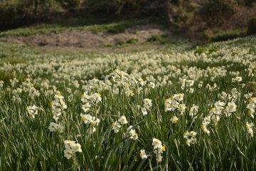 大片大片的花朵
