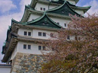 Fantastic cherry blossom tree right in front of the towering castle