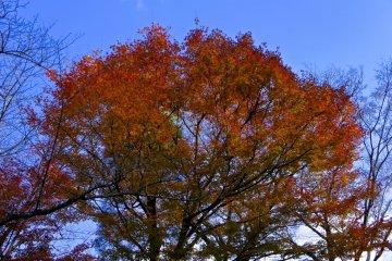 Autumn time peak at Kiyomizu-dera temple gardens