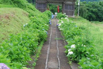 The quiet surroundings of Dainichibo temple don't give away its secret