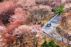 Sakura Mountain Road
