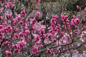 สีสันสุดสวยที่สวน Ikegami Baien
