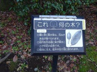 ป้ายอธิบายรายละเอียดของพรรณไม้ในสวน