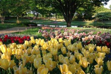 เทศกาลดอกไม้ แห่งสวนโชวะคิเน็น