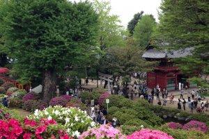 В период цветения азалий в храм стекаются толпы людей