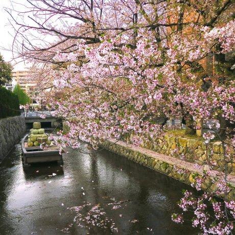 Kiyamachi, Kyoto