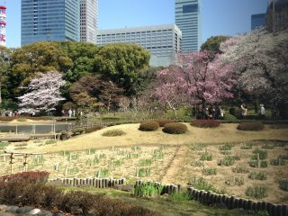 Парк находится в самом центре Токио, в окружении высоток