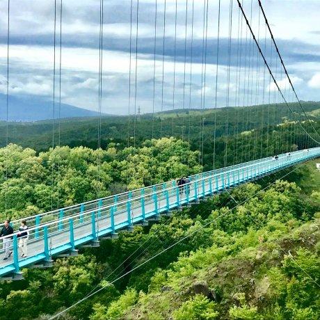 Мисима: вода, история & гора Фудзи