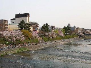 ริมฝั่งแม่น้ำคะโมะหรือคะโมะงะวะ (Kamogawa) เป็นสถานที่ที่สวยงดงามควรค่าแก่การแวะชมในทุกฤดูกาล แต่ในต้นฤดูใบไม้ผลิสองฝั่งแม่น้ำจะสวยงดงามเป็นพิเศษ