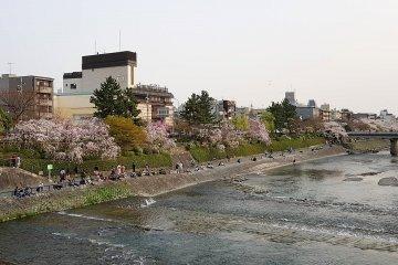 ฮานามิที่คะโมะงะวะในเกียวโต