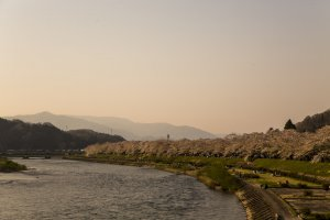 Cherry blossom trees line the Hinokinai River bank during spring in Kakunodate