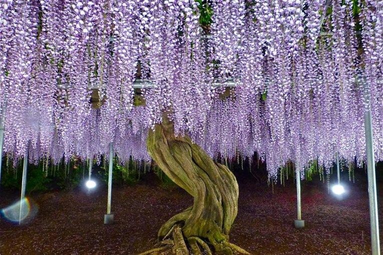 Parque Ashikaga en mayo - parte 2