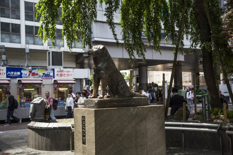 Hachiko Statue in Shibuya