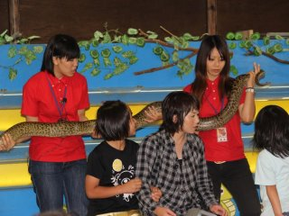 After the Snake and Mongoose show visitors can pose for a picture with a Burmese Python