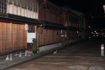 밤때 히가시 오차야 거리를 거닐고 있는 수상한 고양이