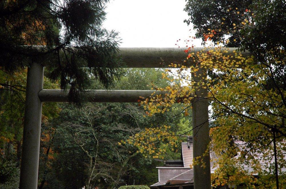 Ворота-тории при входе в святилище; на дворе середина ноября