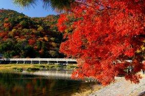 อาราชิยามะ ณ เกียวโต