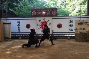 Ninja show