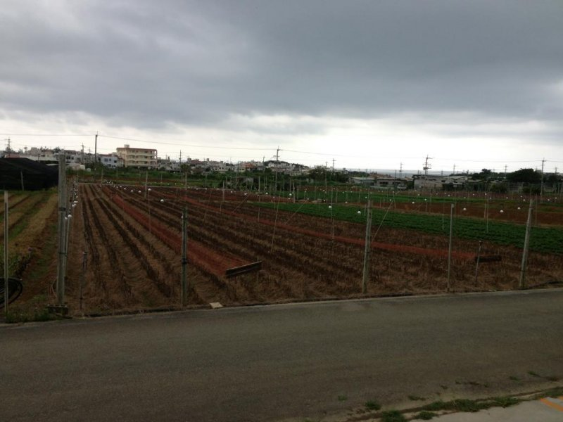 <p>Nakagawa Farm is surrounded by crop fields</p>