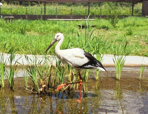 Kounotori no Sato Stork Preserve