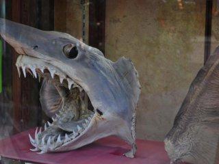 Tôi tìm thấy cái này gần một món ăn trưng bày. Tôi đoán đây là nơi mọi người tới để ăn súp vây cá mập.
