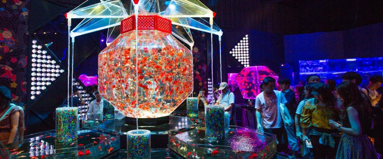 巨型水缸《超・花魁》容納了3,000條金魚