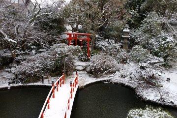 Garden view during winter