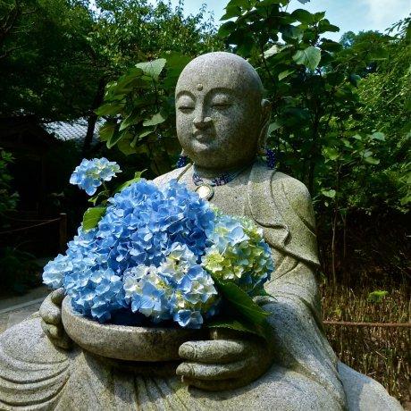 北鎌倉 六月の明月院
