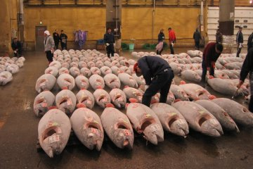 Tsukiji tuna auction about to begin