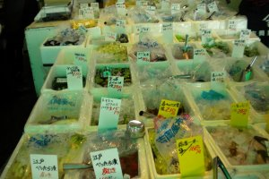 An example of the amazing pickles found at Tsukiji