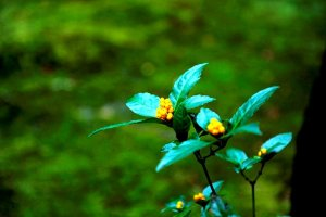 Цветы во дворцеРёандзи