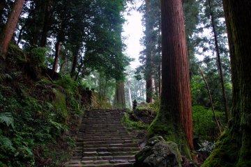 Murō-ji forest staircase