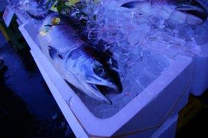Cá tươi ở Hakodate