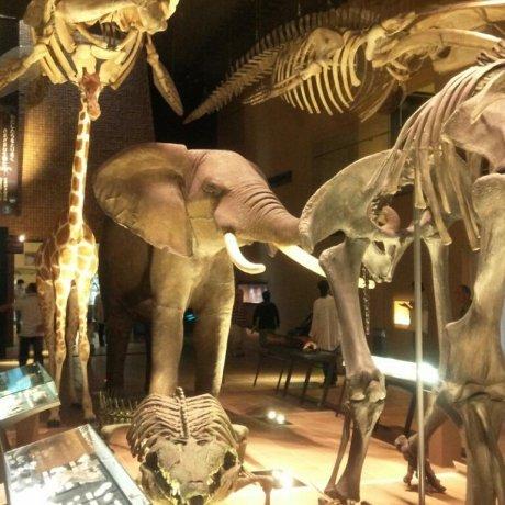 이노치노타비 박물관! (기타큐슈 시립 자연사・역사 박물관)