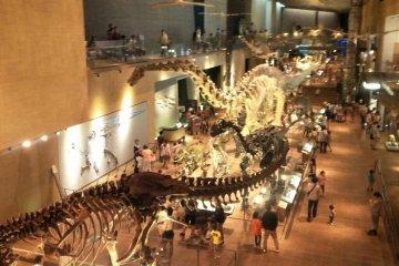 1층 공룡 존의 전체적인 모습입니다!