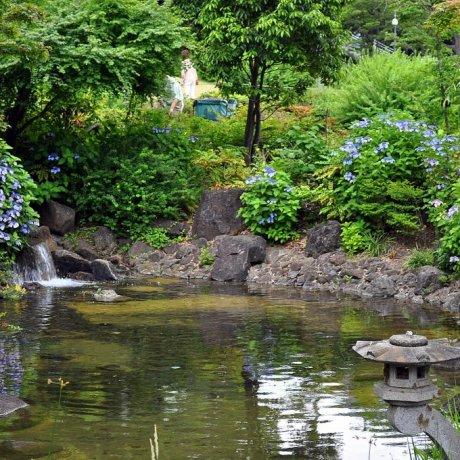 สวนฮิโนะคิโชะในรอปปงงิ