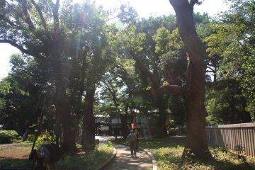 <p>วันที่สวยงามเช่นนี้จะเสร็จสมบูรณ์ด้วยการเดินทางไปสวนสาธารณะอุเอโนะ</p>