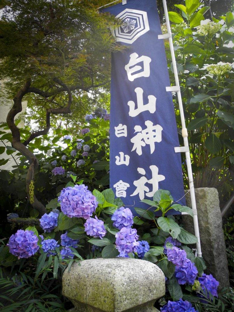 <p>The entrance to the Hakusan Shrine</p>