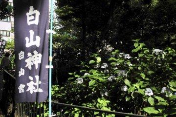 <p>Flag of the shrine</p>