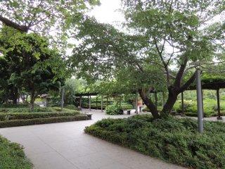 Natural shade by trees
