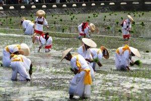 Фестиваль рисовых плантаций в храме Сумиёси