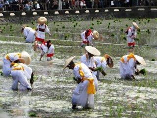 Le festival de la plantation du riz au sanctuaire Sumiyoshi