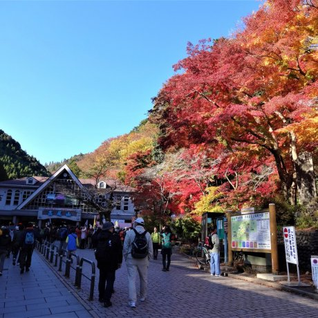 Mount Takao Autumn Leaves Festival