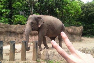 코끼리! 먹이 주기 해보세요^^*
