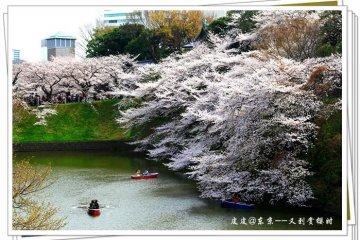 樱花述说着划船人的浪漫情思