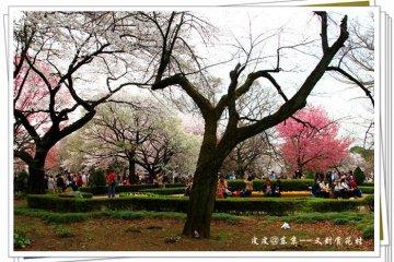 樱花树下的朋友聚会