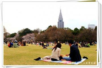 樱花树下的爱情