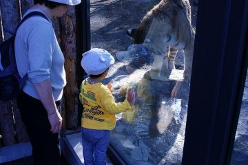 The little ones love the big cats