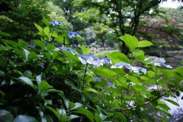 Take a stroll at Arisugawa-no-miya Memorial Park 160 meters from Azabu Court